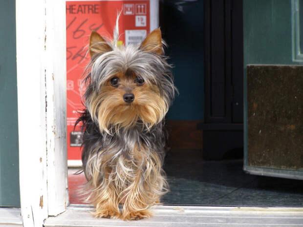Житель Шарыпово попал под следствие за жестокое убийство собаки