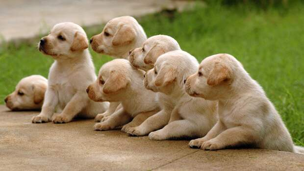 Учёные доказали врождённую способность собак понимать людей