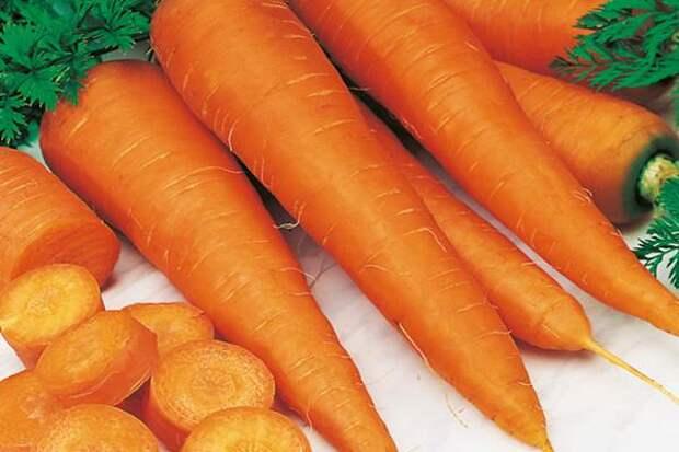 Лечебные свойства моркови обыкновенной