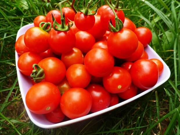 Картинки по запросу помидоры в теплице