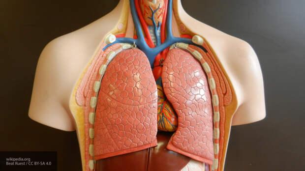 Пульмонолог рассказал, как защитить здоровье легких во время пандемии коронавируса