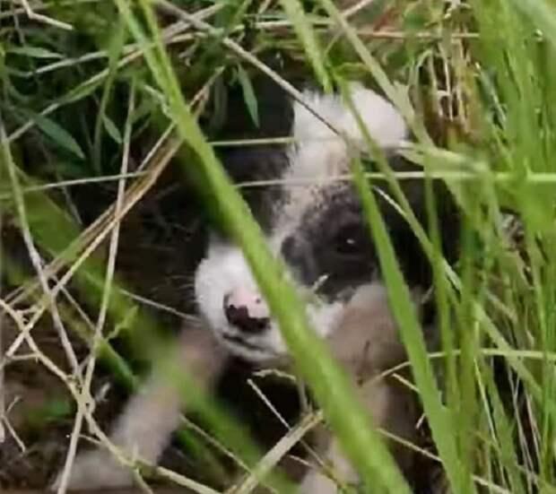Щенок в траве