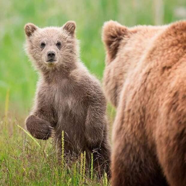 Подборка самых очаровательных детёнышей диких животных.