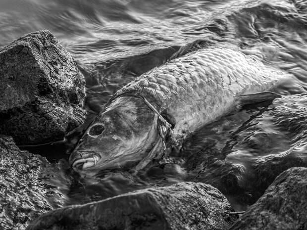 На берег Охотского моря выбросился косяк сельди