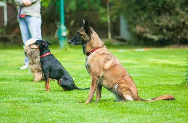 В Некрасовке появятся новые собачьи площадки