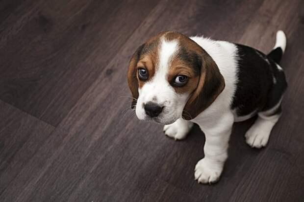 7 поступков владельца, которые вызовут у собаки сильную грусть и обиду