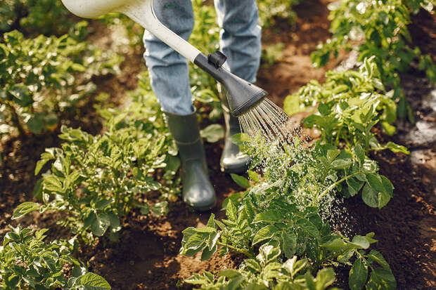 Жители России стали больше интересоваться огородничеством в пандемию