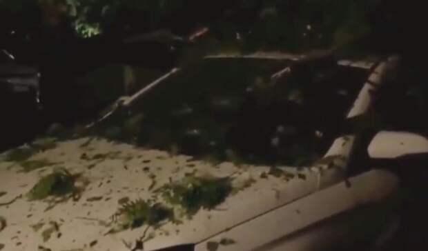 Рухнувшее из-за ветра дерево повредило шесть машин в Ростове-на-Дону