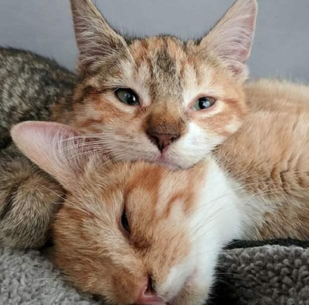 Котята с синдромом Дауна остались в одиночестве, и никто не забирал их из приюта. Но однажды появилась Мишель