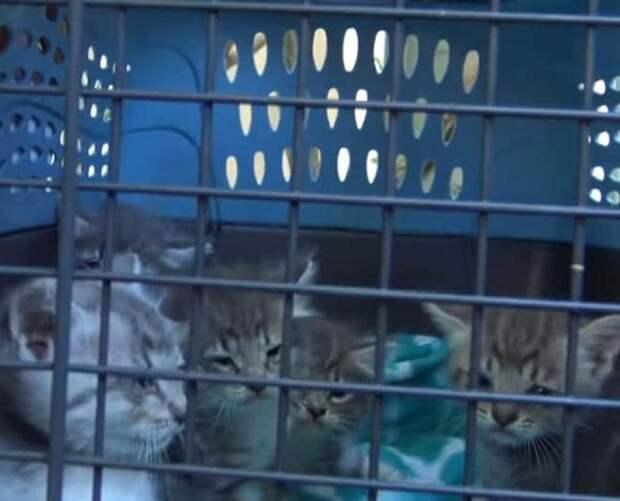 Грустные котята