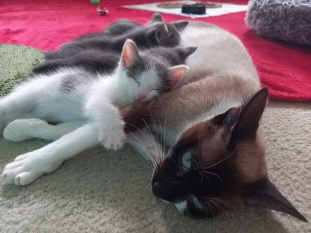 Котёнок был сам по себе, пока одна кошка не взяла его к себе в семью