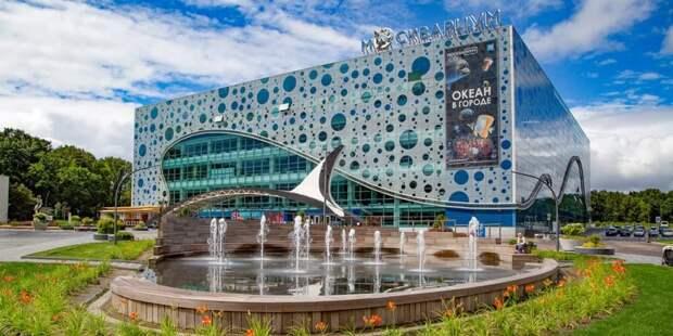 Наталья Сергунина: 10 млн человек посетили «Москвариум» на ВДНХ за шесть лет. Фото: Пресс-служба Москвариума