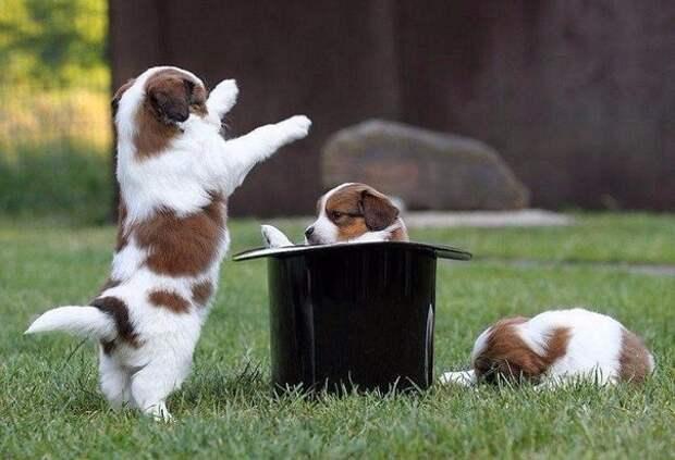 Фокусник животные, коты, милота