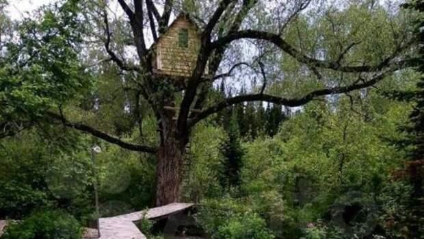 В Алтайском крае сдают усадьбу с домиком на дереве и мотособакой
