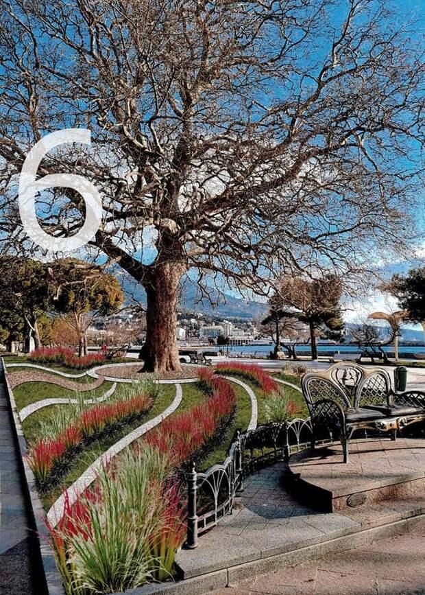 В Ялте предложили выбрать, как будет выглядеть клумба возле 170-летнего платана