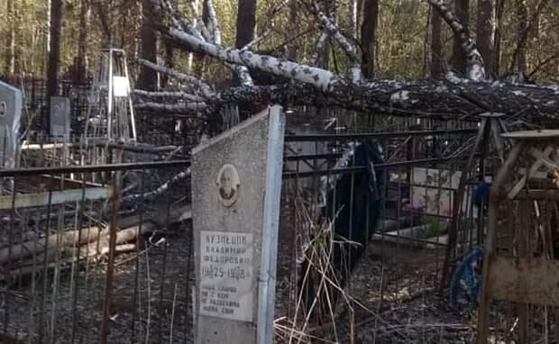 Береза рухнула на женщину в Радоницу на Заельцовском кладбище