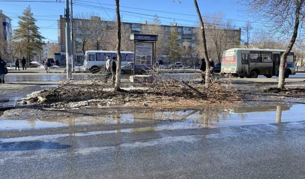 В Оренбурге на проезжей части Степного района появилась плотина из веток