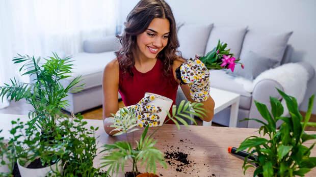 Когда и как пересаживать комнатные растения: пошаговая инструкция