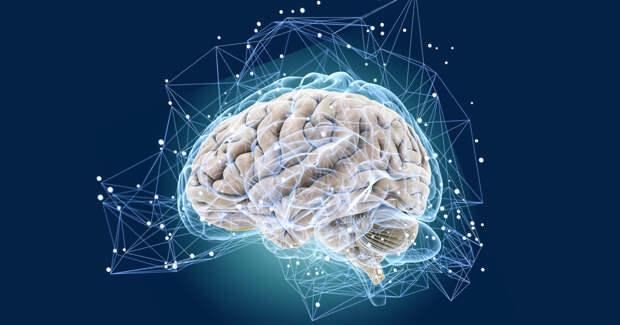 Нейробиологи обнаружили способ омолодить мозг