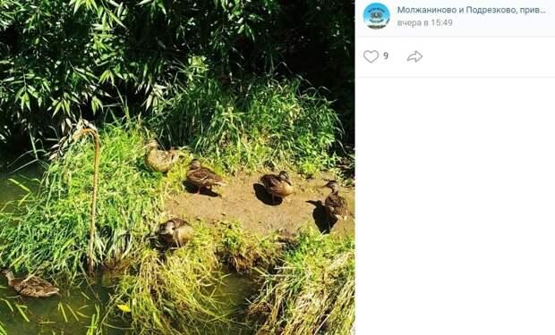 Фото дня: утиная компания в парке «Подрезково» принимает солнечные ванны