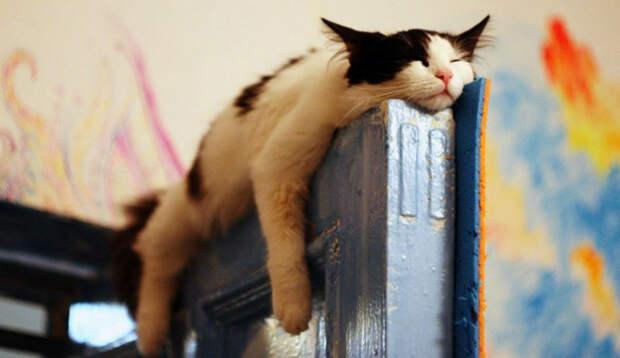 Коты, познавшие наукусна