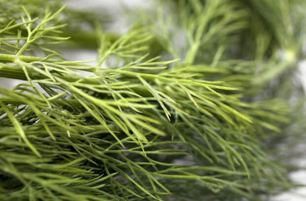Травы и специи с целебными свойствами