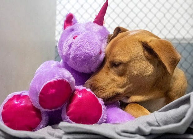 Бездомный пес пять раз пытался украсть единорога и в итоге обрел хозяев