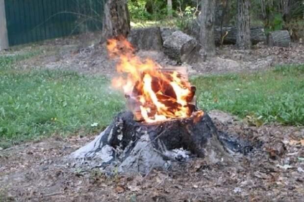 Сжигание пня