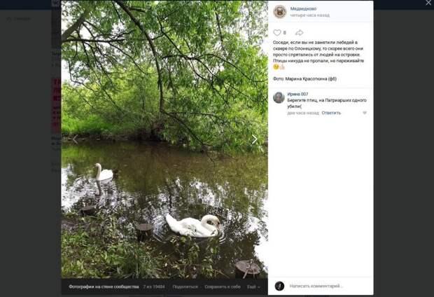 Лебеди в сквере по Олонецкому проезду нашлись