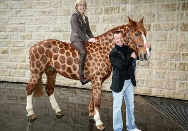 Бритые...лошади