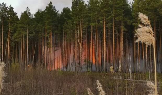 На 16 км трассы Тюмень - Курган отмечается задымление из-за лесного пожара