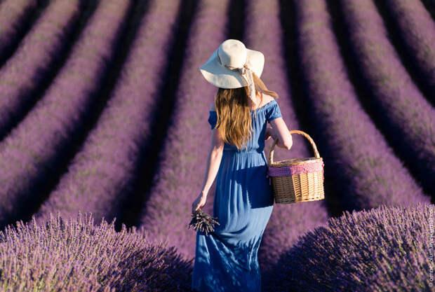 Чудеса Франции: невероятно красивые поля лаванды в Провансе!