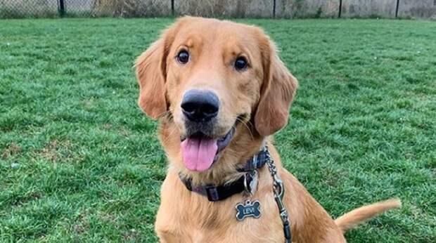Ради счастья оказаться в новой семье, одинокий пёс отправился в многочасовое путешествие