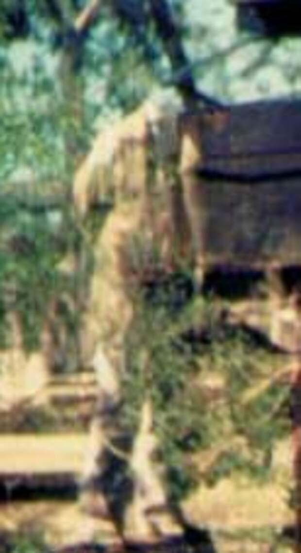 Почтовый дилижанс картина Лаура П фигура