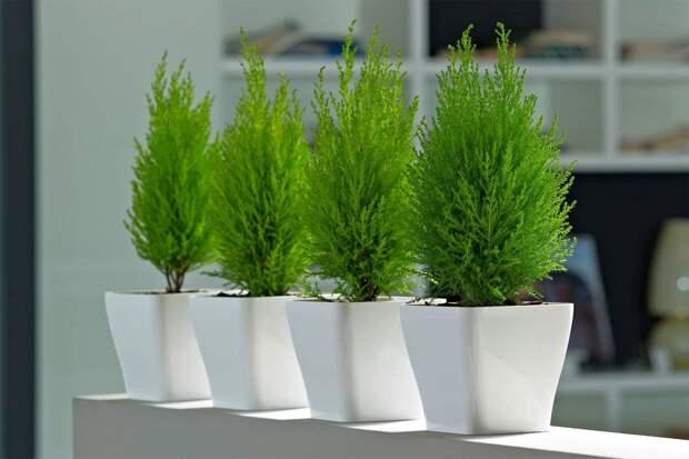 13 супер полезных растений для дома, которые улучшат ваше самочувствие