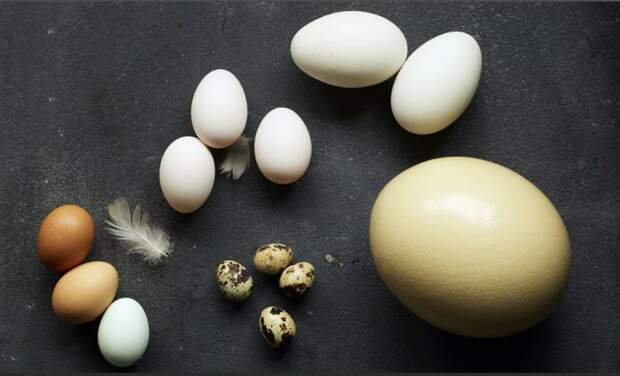 Минсельхоз РФ не обсуждает меры прямого регулирования цен на мясо птицы и яйца