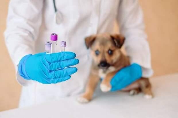 Ветеринары в Тамбове продолжают бесплатно прививать домашних животных от бешенства