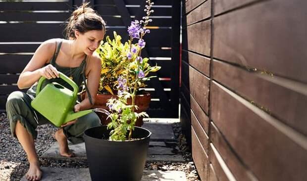 Как поливать растения - 5 золотых правил полива