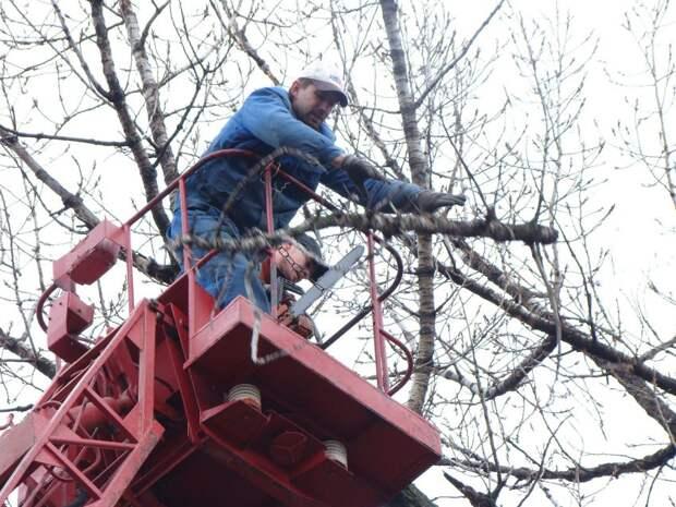 Коммунальщики спилили сломанную ветку в «Березовой роще»