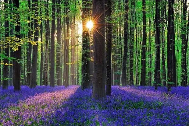 Самые интересные и загадочные леса мира — ТОП-10