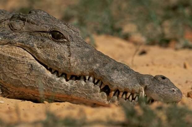 10 совершенно ложных представлений о животных