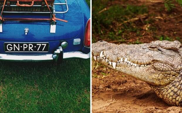 Мужчина заглянул под машину и вместо котенка нашел трехметрового крокодила