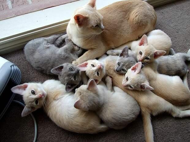 22. Если у кошки вдруг появились котята, их можно подарить друзьям. жены, интересное, кошки, юмор