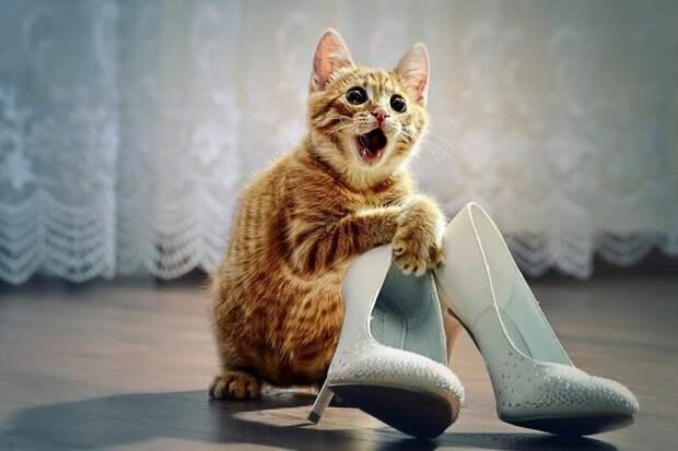 17. Кошка не цокает каблуками по паркету, когда у вас болит голова. жены, интересное, кошки, юмор