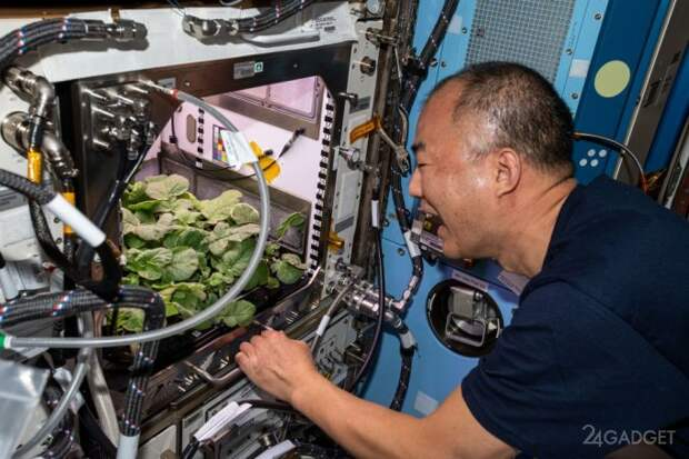 Первый урожай редиса собран на МКС