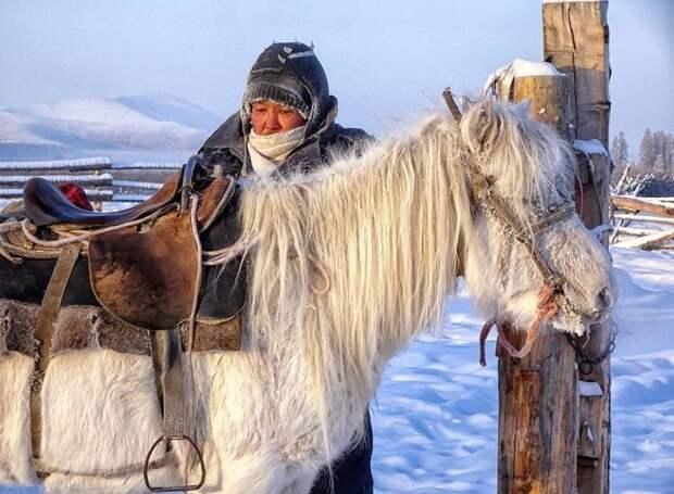 В настоящее время сформированы три типа якутских лошадей: северный оригинальный тип, южный, более мелкий тип, не подвергавшийся скрещиванию с заводскими породами; южный крупный тип, подвергавшийся скрещиванию Порода, животные, лошадь, россия, саха, фото, якут, якутия
