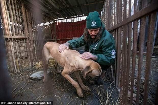 Собаки жили в ужасных условиях животные, защитники животных, новости, собаки, спасение, фото, щенки, южная корея