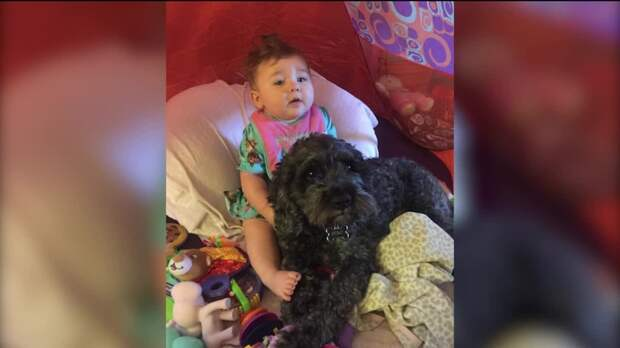 img-Firefighters-family-dog-save-girl-from-house-fire
