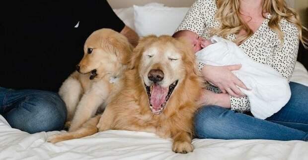 Маленький щенок стал настоящей поддержкой и опорой для 11-летней слепой собаки