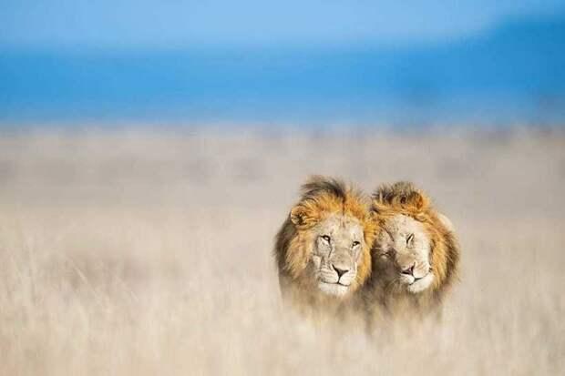 Лучшие фотографы дикой природы объединились, чтобы собрать $250 000 для парков Африки